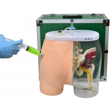 Simulador de Injeção Intramuscular no Glúteo e Visualização Óssea, Muscular e Nervosa