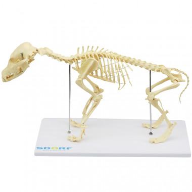 Esqueleto de Cachorro de Porte Pequeno (Resina Plástica)