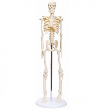 Esqueleto Humano de 45 cm com Haste e Suporte