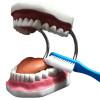 Arcada Dentária com Língua e Escova Modelo Anatomico